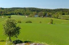 Norwegian Field Landscape Stock Image