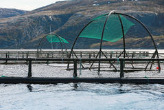Norwegian fish farm cages for salmon growing Royalty Free Stock Image