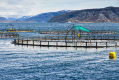 Norwegian fish farm Royalty Free Stock Photo