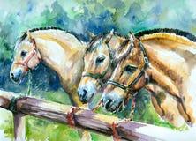 Norwegian fjord horses. royalty free illustration