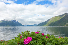 Norwegian fjord with a rose Stock Image
