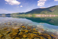 Norwegian fjord summer landscape Royalty Free Stock Images
