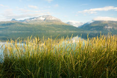 Norwegian fjord. Summer view of Norwegian fjord. Natural background Royalty Free Stock Photo