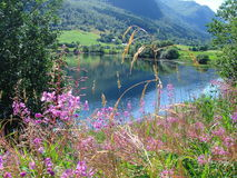 Norwegian fjords. Beautiful lanscapes from norwegian fjords  in the summer - europe travel Royalty Free Stock Photo
