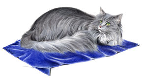 Norwegian Forest Cat. This is wonderful handmade picture of a Norwegian Forest Cat made with pencils stock illustration