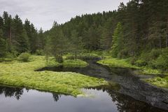 Norwegian forest clearing with still water Flatelandsfjorden Royalty Free Stock Photo