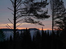 Norwegian Forrest. And sunseth in steinkjer Stock Photography