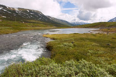Norwegian landscape. Norwegian summer landscape with a mountain on background and mountain river Stock Photography