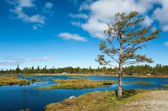 Norwegian landscape. A tree by a lake on a norwegian mountain Royalty Free Stock Photos