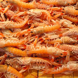 Norwegian Lobster Royalty Free Stock Photo