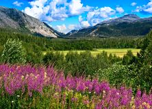 Norwegian mountains in summer Stock Photo