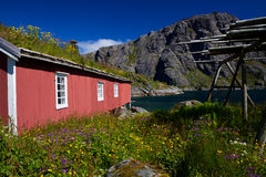 Norwegian rorbu fishing hut. Traditional red fishing rorbu hut with sod roof on Lofoten islands in Norway royalty free stock photos