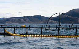 Norwegian round fish farm. For salmon growing in fjord Royalty Free Stock Photo