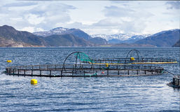 Norwegian salmon fish farm Royalty Free Stock Images