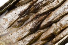 Norwegian sardines in can Stock Images