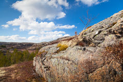 Norwegian spring landscape with trees on mountains Royalty Free Stock Image