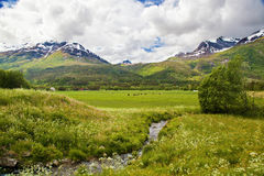 Norwegian summer landscape Royalty Free Stock Photos
