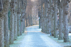 Norwegian tree-lined street Royalty Free Stock Photography