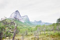 Norwegian tundra and mountains Royalty Free Stock Photos