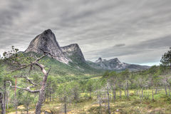 Norwegian tundra and mountains Stock Photography