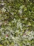 Norwegian tundra surface Stock Photo