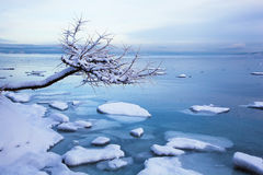 Norwegian winter fjord landscape with tree and ice Stock Images