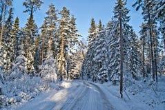 Norwegian winter landscape. Snow-laden trees in the forest by Brekke in Halden Stock Photo
