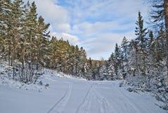 Norwegian wood. Stock Images