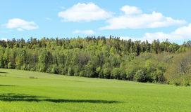 Norwegian woods and fields Stock Photography