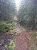 Norwegian woods Stock Images