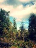 Norwegian woods Royalty Free Stock Photo