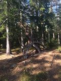 Norwegian woods. Plant and trees in the Woods of lillestrøm royalty free stock photo