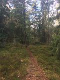 Norwegian woods. Plant and trees in the Woods of lillestrøm royalty free stock image