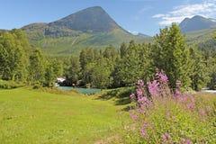Norwegische sonnige Wiese Stockfotos