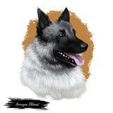 Norwegisches elkhound, inländisches Säugetier der Spitzart digitale Kunst Lokalisiertes Aquarellporträt, Hund entstand von Norweg lizenzfreie abbildung