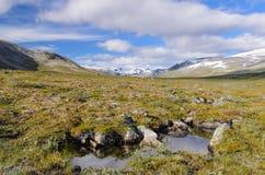 Norwegisches fjaeldmark im Nationalpark Jotunheimen stockbilder