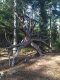 Norwegisches Holz Stockbilder