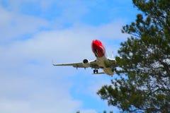 Norwegisches Luftpassagierflugzeug, das niedrig über Bäume fliegt Stockfoto