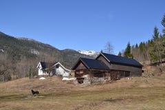 Norwegu gospodarstwo rolne w wiośnie zdjęcie royalty free