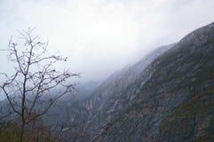 Norwescy fjords i góry Fotografia Stock