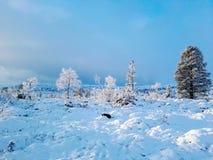 Norweska zima II zdjęcie stock