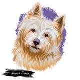 Norwich-Terrierhaustier mit digitaler Kunst des langen Pelzes und der netten Mündung Canis Lupus familiaris, Haustier von Ursprun vektor abbildung