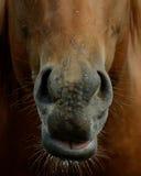 nos zdjęcie stock