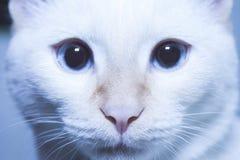 Nos av katten Royaltyfria Foton