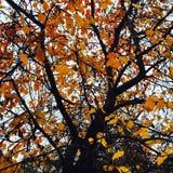 Nos beaux environs Photo libre de droits