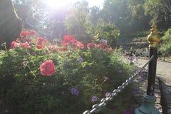 Nos jardins Fotos de Stock