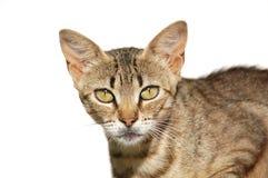 Nos olhos do gato Imagens de Stock Royalty Free