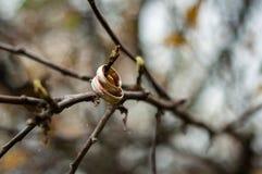 Nos ramos das alianças de casamento de uma árvore fotografia de stock
