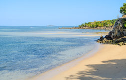 Nosaty Komba Madagascar zdjęcie royalty free