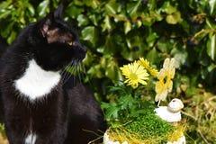Nosaty tomcat siedzi blisko kolorów żółtych kwiatów i białego ceramicznego cakla w ogródzie obraz stock